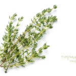 5 Reasons to Add Thyme to Your Life