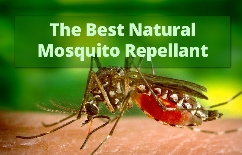 The Best Natural Mosquito Repellant